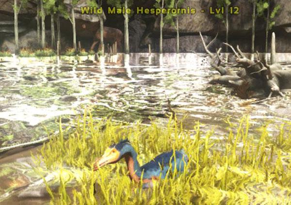 Ark_Duck